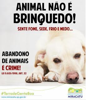Prefeitura de Miracatu alerta: abandono de animais é crime