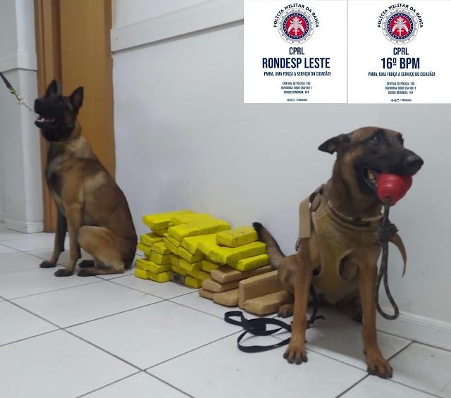 Cães policiais localizam 42 tabletes de maconha em Araci