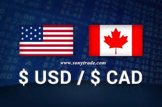 USD CAD Loonie