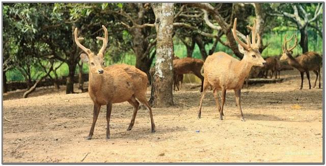 Rusa Bawean;Taman Rusa Bawean;10 Top Destinasi Wisata Gresik;