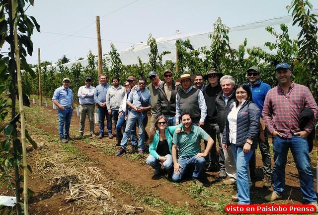 12ª reunión del GTT Cerezas del Sur