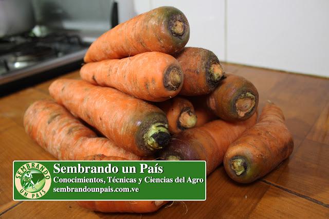 Contenido Nutricional: Zanahoria