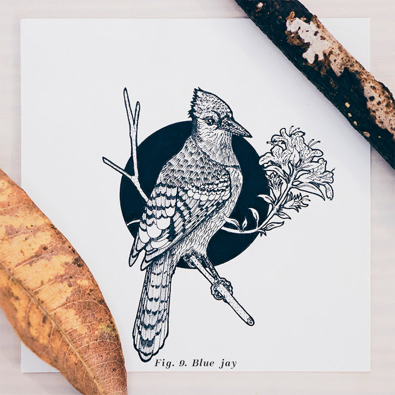 15 Beautiful Birds Illustrations by Daniel Merac.