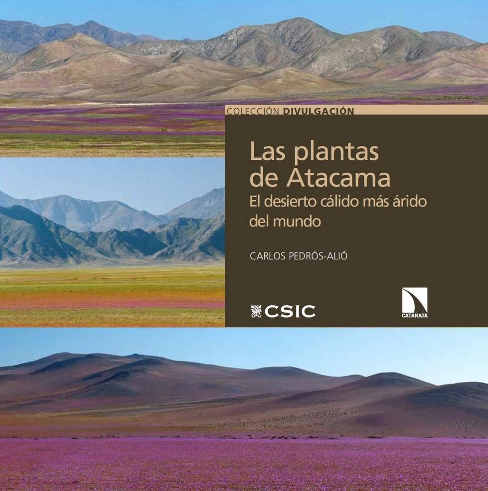 Imágenes del desierto florido de Atacama