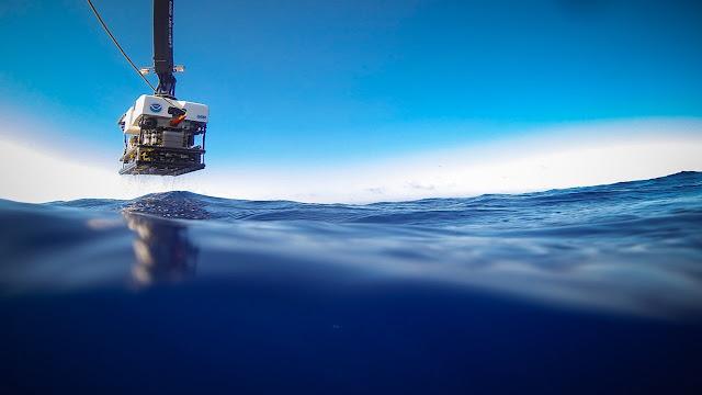 شعب في اعماق البحر، ماذا يوجد داخل قاع البحر، أعماق البحر الأحمر، أعماق المحيطات، مكونات قاع البحر، رحلة إلى أعماق البحار، ماذا يوجد في البحر، عمق البحر