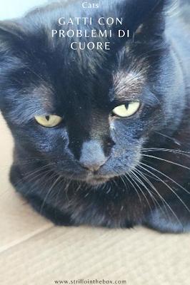 gatto cure con problemi cuore