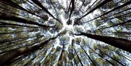 Hutan PInus Cikole PAL 16