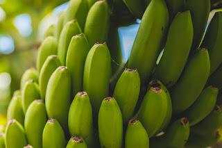 pisang, bioetanol dari pisang, bioetanol