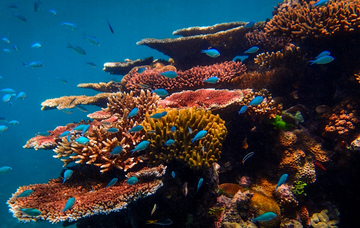 Great Barrier Reef Coral Fish