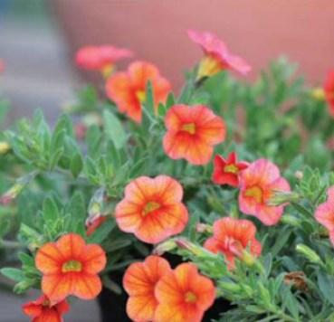 Plant a Spring, pot, beautiful flowers, Beautiful Garden
