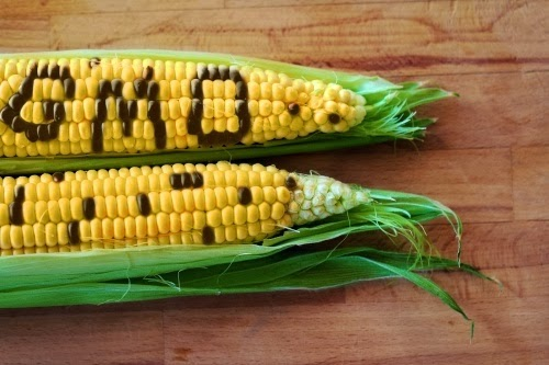 Az EU intézkedései ellenére a magyar kormánynak nem kell a génmódosított kukorica