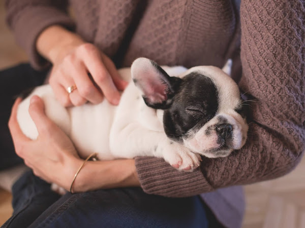 Useful tips for first time dog owners