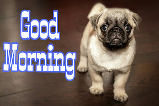Funny Good Morning Images Pictures HD Download