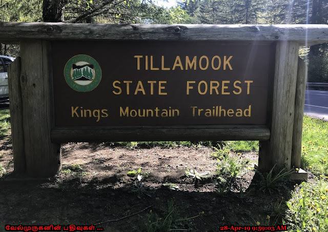 Kings Mountain Trail Oregon