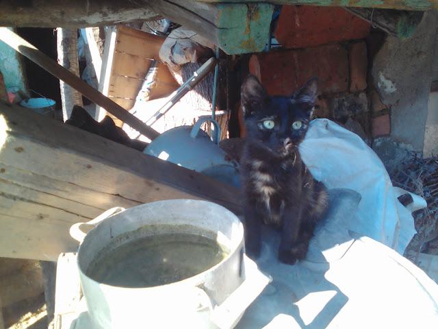 Diva Cat
