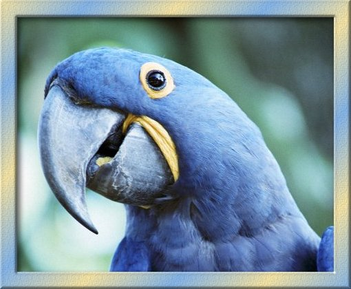 Wallpaper Muslimah Cute Pictures Top Ten Beautiful Birds Top 10 Parrot Wallpaper