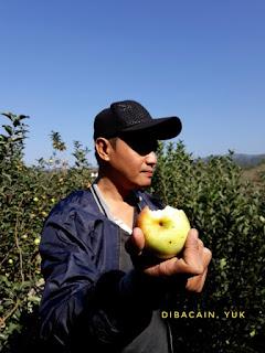 """menikmati apel segar dari wisata petik apel ktma malang"""
