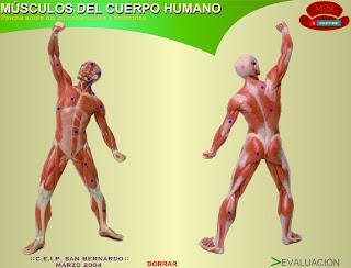 http://www.gobiernodecanarias.org/educacion/3/WebC/eltanque/CM6/cuerpo/muscuerpo.html
