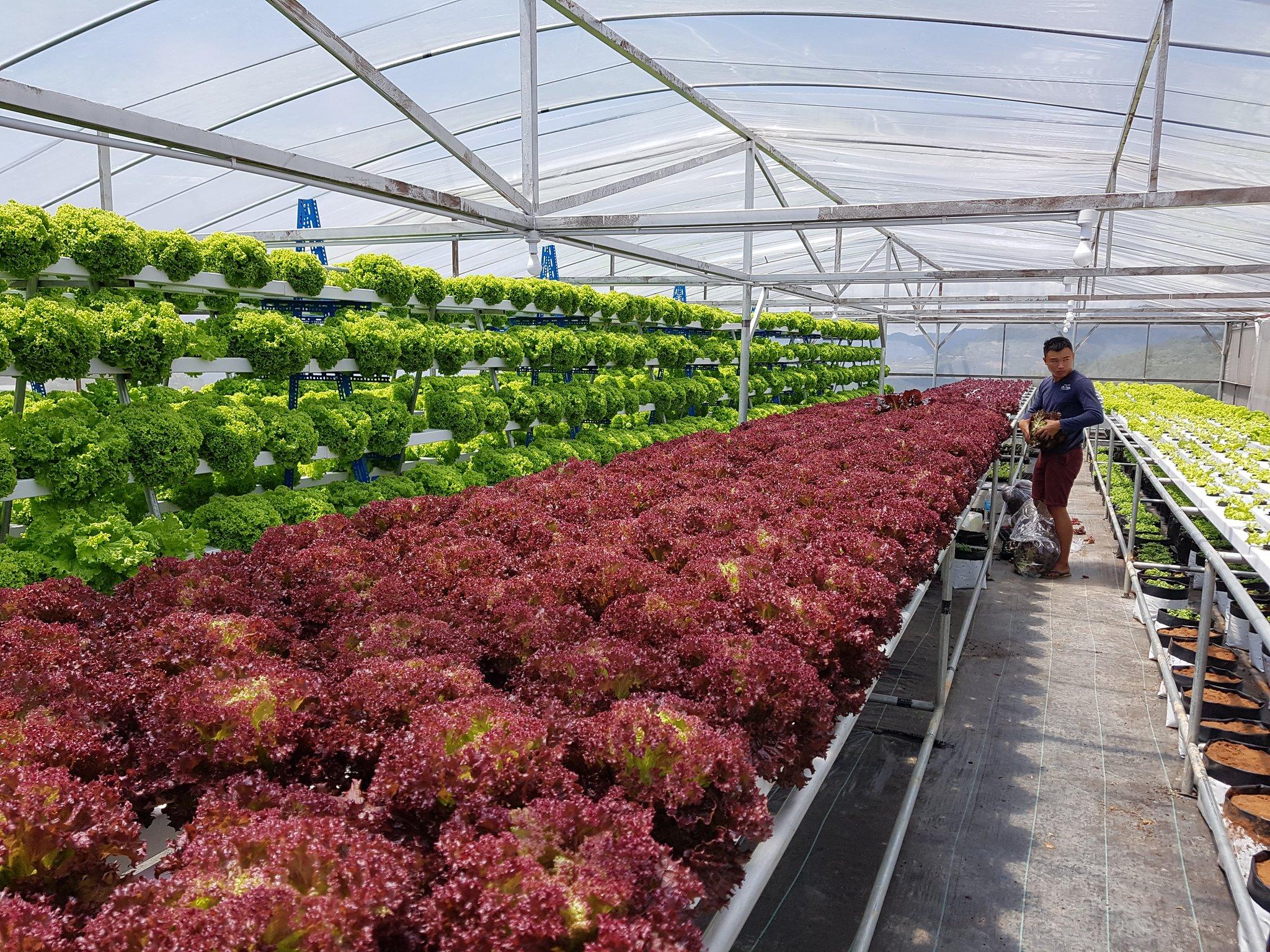 tips kebun niaga tanaman pokok bidang pertanian
