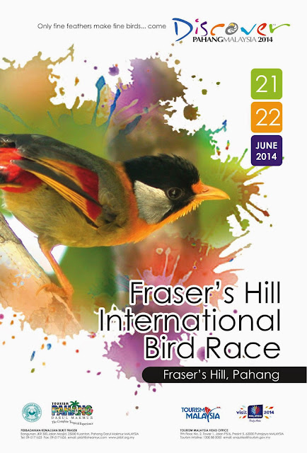 Bird Race 2015 at Fraser's Hill Malaysia