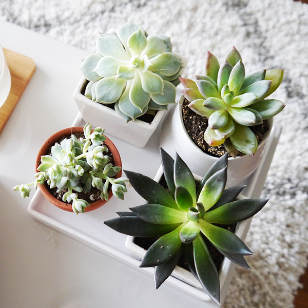 coffee table succulent garden