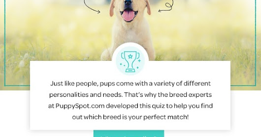 Find Your Perfect Dog Breed