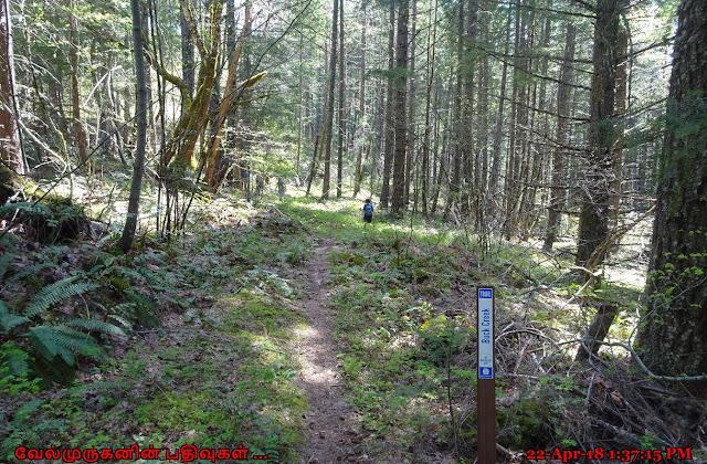 Buck Creek Falls Loop Trail Washington
