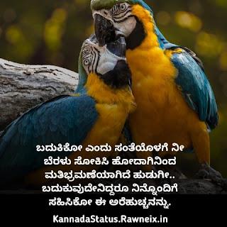 Love Kavana