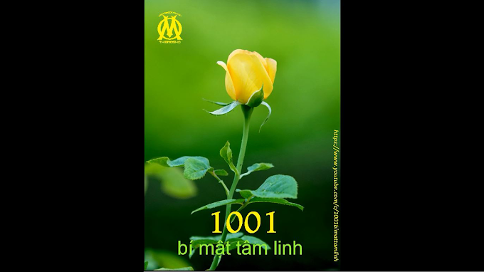 1001 Bí Mật Tâm Linh (0080) Khi bạn cảm thấy có trách nhiệm với những vật nhỏ bé nhất, cuộc sống sẽ đáp lại bạn bằng hàng ngàn cách.