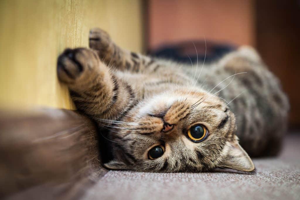 Program Kesedaran Kembiri Kucing dan Anjing Liar/Peliharaan MBIP