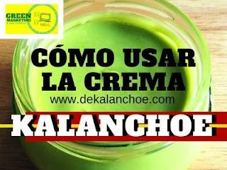 Kalanchoe, plataforma de contenidos de ECO SEO Green Marketing