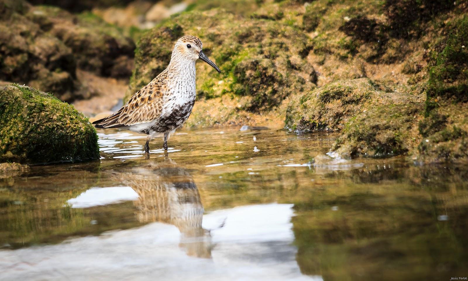 Fotobirding in Sant Adrià de Besòs