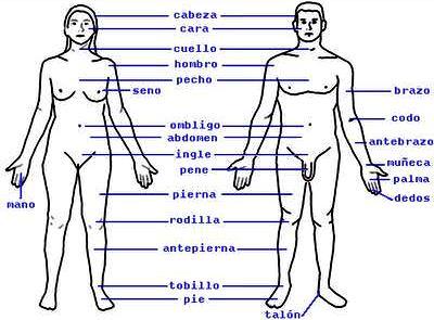 Dibujo de cuerpo humano indicando partes de hombre y mujer