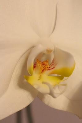 prezent na Dzień Matki, kwiaty