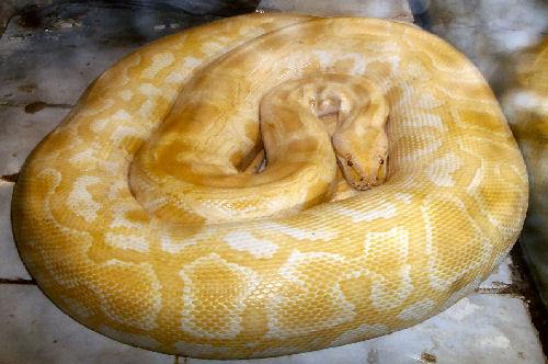 Snake #1