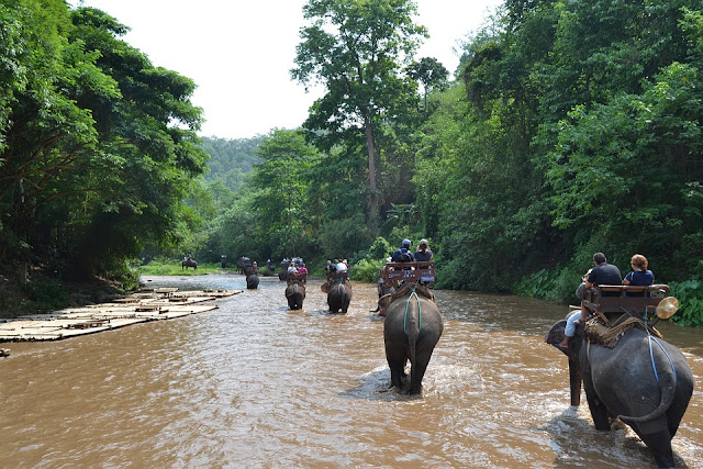 camp-elephants-2319080_960_720.jpg