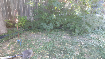 Dufferin Grove Toronto Garden Renovation before by Paul Jung Gardening Services--a Toronto Gardening Services Company