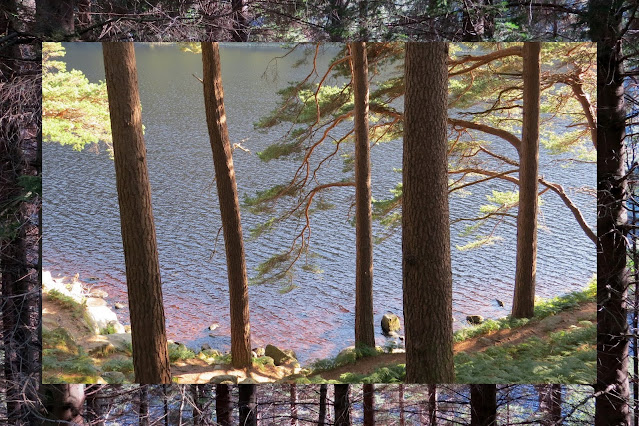 Hillwalking at Glendalough in County Wicklow - Through the Woods