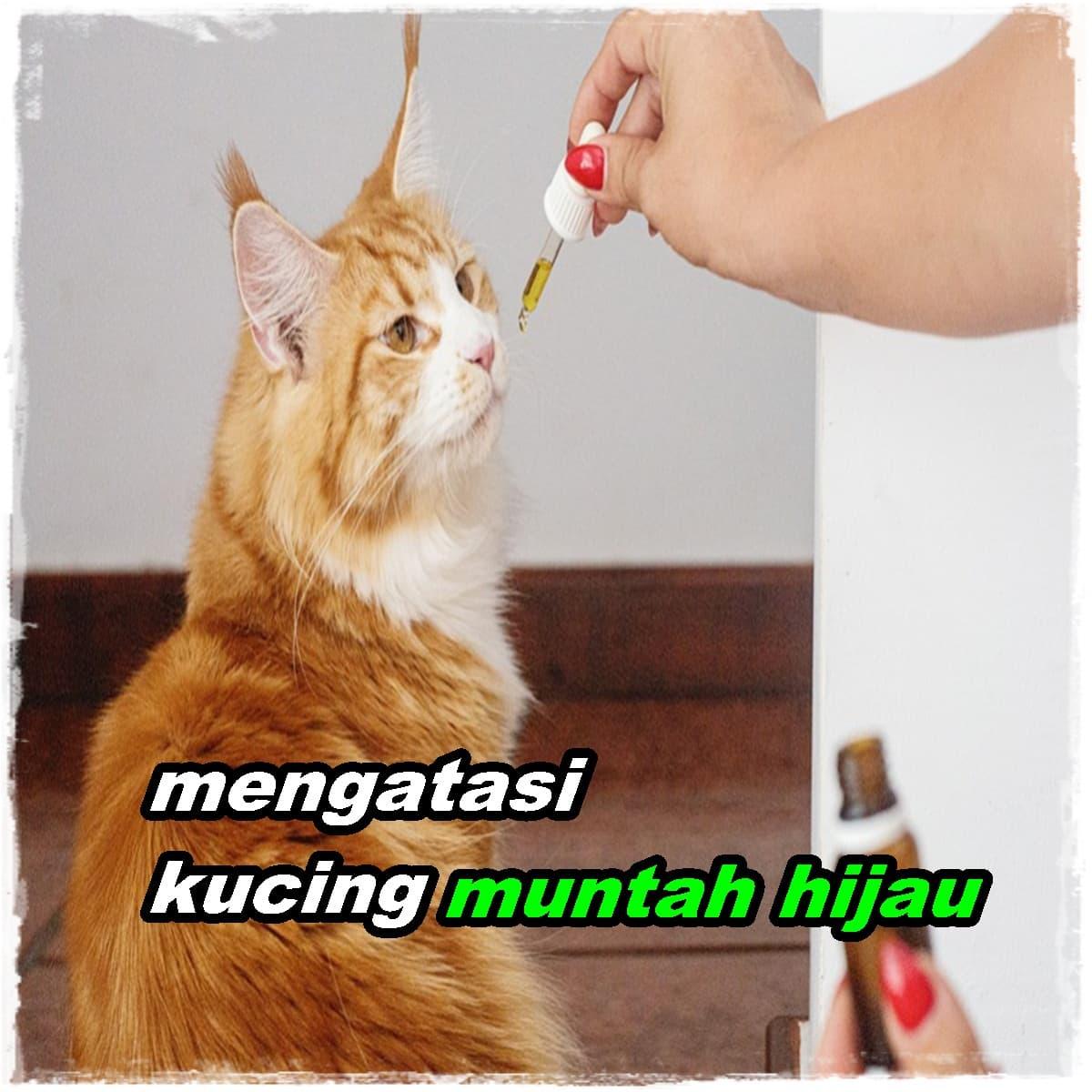 Kucing Muntah Hijau? Begini Cara Mengatasinya