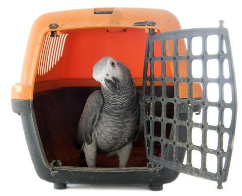 Bird Carrier