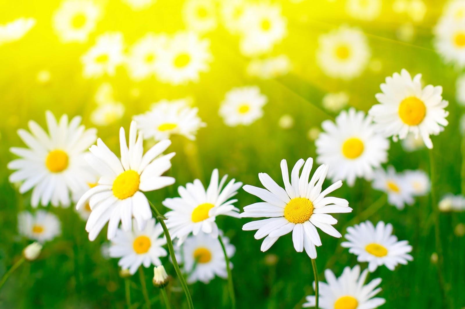 Цветы: Из чего состоит цветок