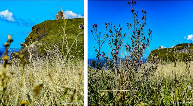 Vegetação típica da região dos Cliffs of Moher, Irlanda