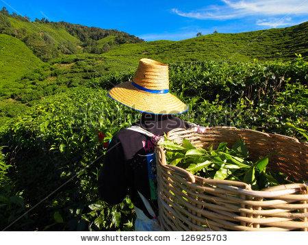 Perempuan Petani Di Tengah Situasi Darurat Agraria