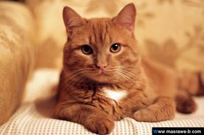 صور صور قطط كيوت 2020 خلفيات قطط جميلة جدا cats3.png