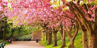 İlkbahar hakkında yazılar