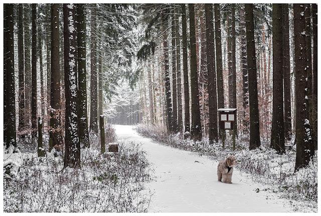 Winter im Zeitzer Forst I