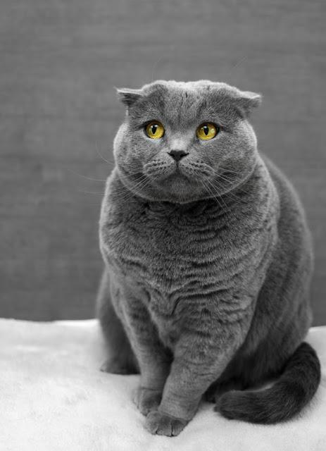 Cara Merawat Kucing Tanpa Kandang