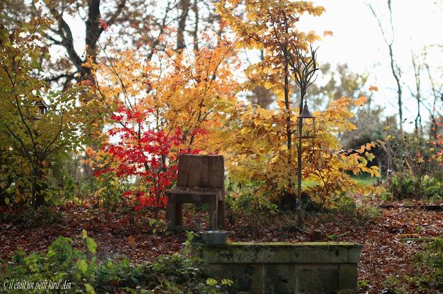 jardin en automne et acers