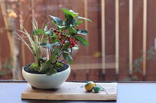 教室の生徒の皆さまの山野草盆栽作品に独楽を添えて
