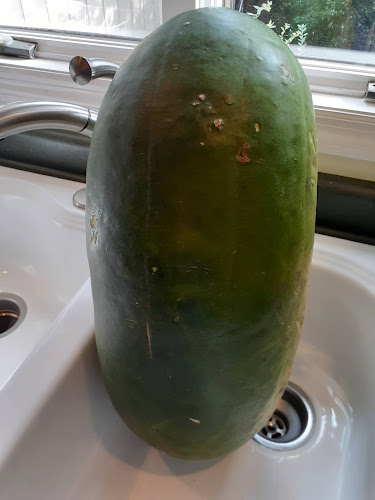 Bradford watermelon
